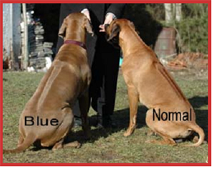 blue and normal sitting